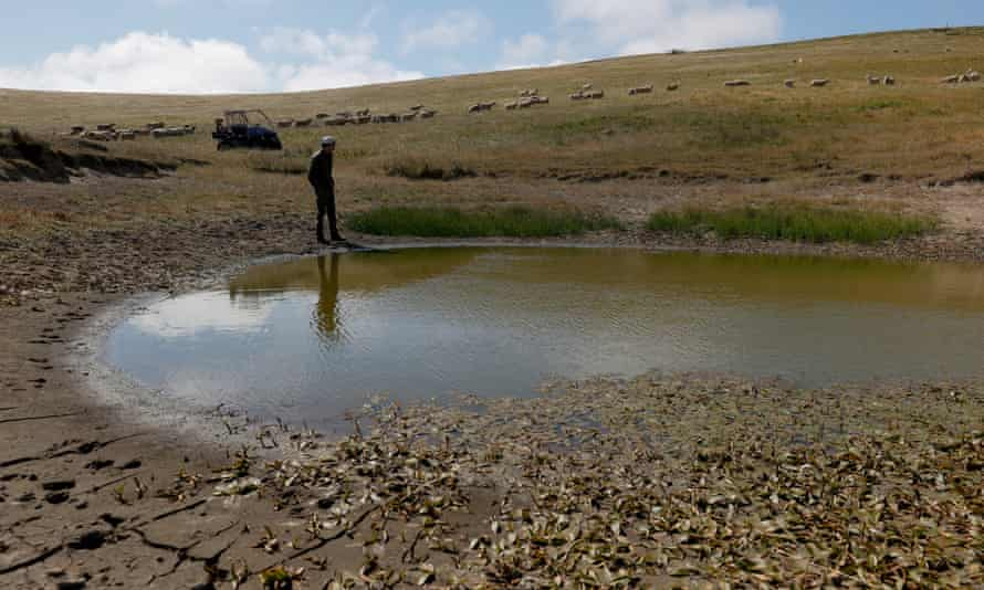 Jim Jensen, a rancher, walks by a pond with low water levels in Tomales, Marin county.