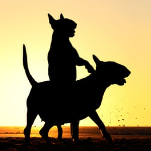 "Alice van Kempen caught this silhouette of her two dogs in ""Riding Along"" in Rockanje Netherlands"