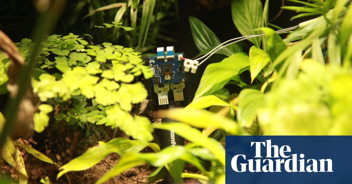 Meet Pete, the world's first selfie-taking plant