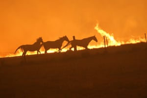 Horses run as fire approaches Tallabrook lodge a property along the Bumbalong Road North of Bredbo.