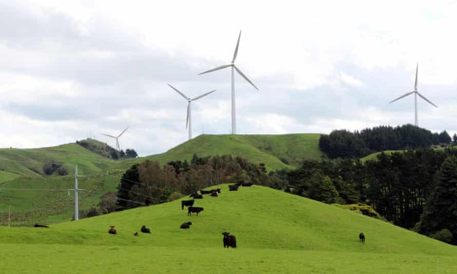 Cows graze near wind farms on the east coast region of Hawke's Bay, New Zealand October 30, 2020.