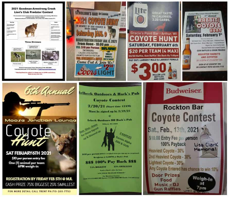Flyers advertising local coyote and wolf hunts, collected by the Wolf Patrol team