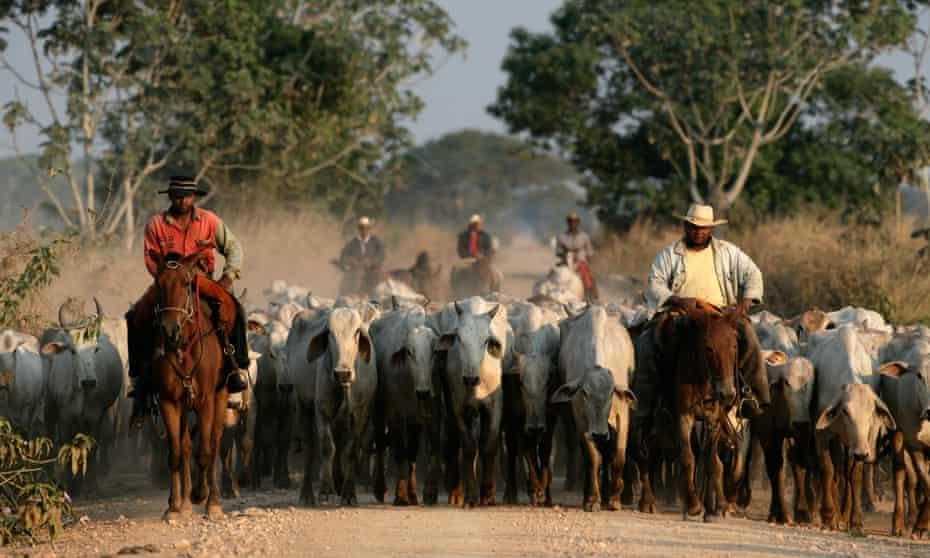 A atividade agrícola, concentrada na pecuária de corte e na soja, dois dos principais itens da pauta de exportações do Brasil, experimentou forte recuperação no Pantanal.
