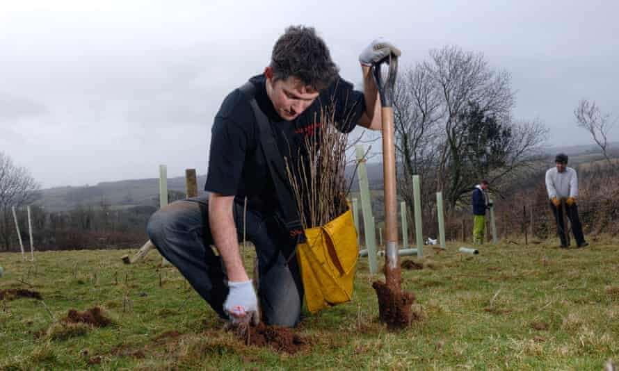 Contractors planting deciduous trees at Worston Farm on behalf of the Woodland Trust
