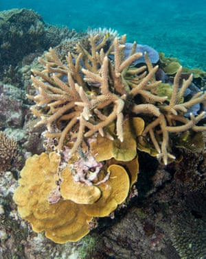 Coral reefs on Heron Island support mind-boggling biodiversity