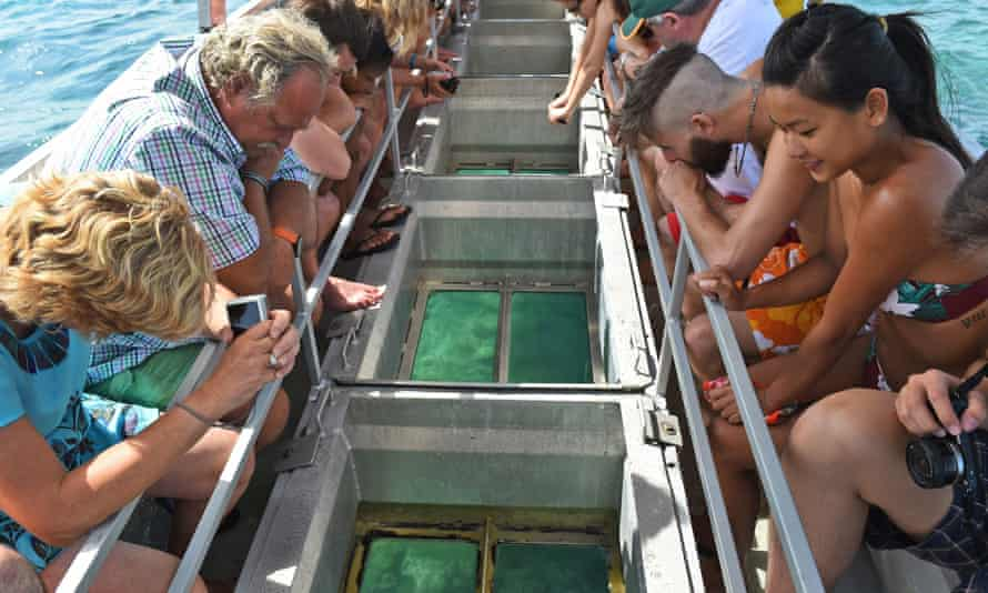 File photo of tourists looking at coral through a glass-bottomed boat on Australia's Great Barrier Reef