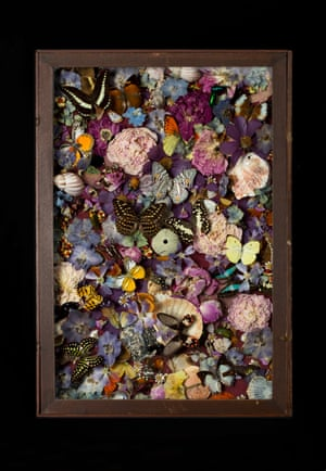 Paveia superba 2014 Victorian case, mixed insects, flowers, shells, pins