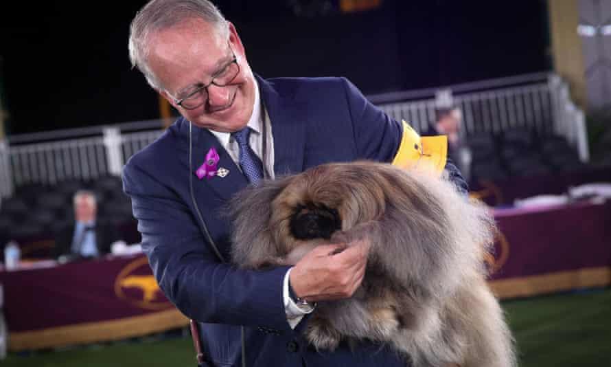 Wasabi, a Pekingese of East Berlin, Pennsylvania is held by his owner and handler David Fitzpatrick