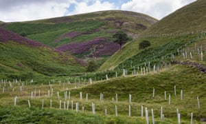 Native tree planting in the Peak District, Derbyshire.