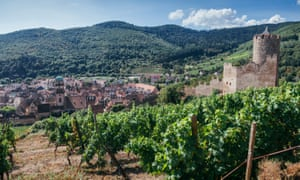 Vineyard And Old Castle Near Kaysersberg, A Little Village In Alsace, FranceVineyard and old castle near Kaysersberg, a little village in Alsace, France