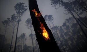 View of the devastation caused by a forest fire in an area of Brasilia's national forest. More than 100,000 fired have been detected this month.