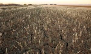 Cracks form in a field near Firebaugh, California.