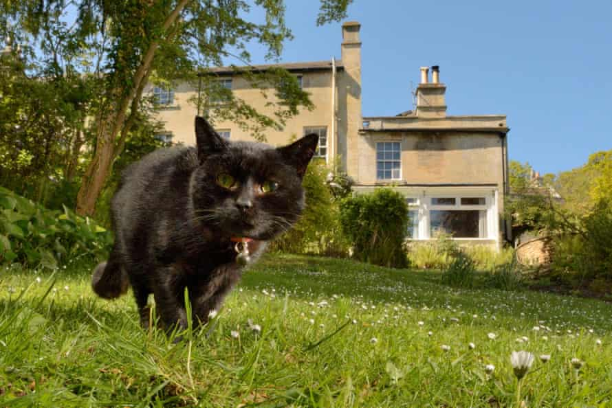 A black cat hunting in a garden