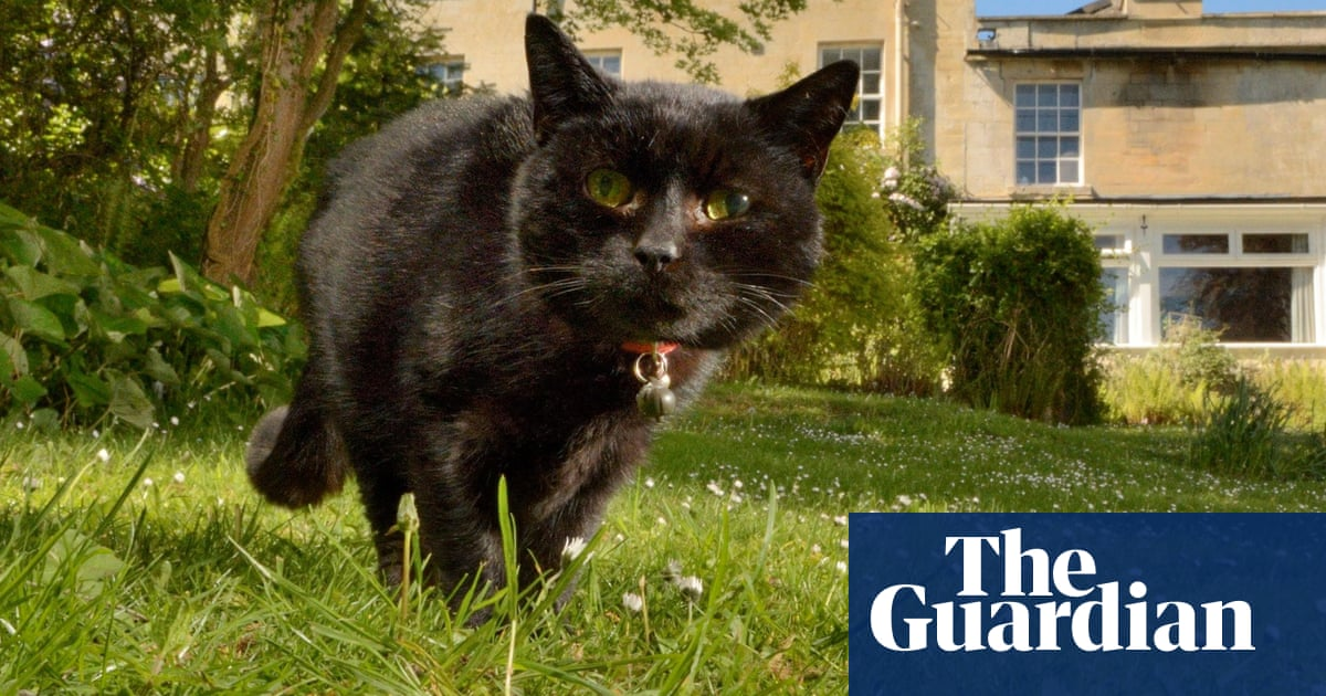 Pet cat diagnosed with Covid-19 in first UK case of animal infection