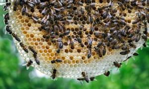 'Honeybees become so much more startling when they work in unison'