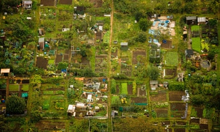 Allotments: gardening in urban areas can make a change.