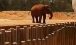 Elephant at Rabat zoo