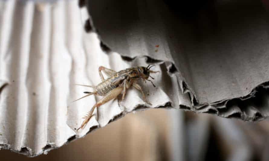 One of the crickets at Thringill.
