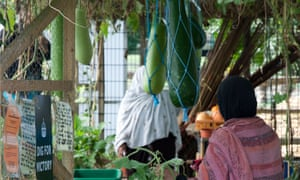 Bangladeshi women tend to vegetables in a greenhouse