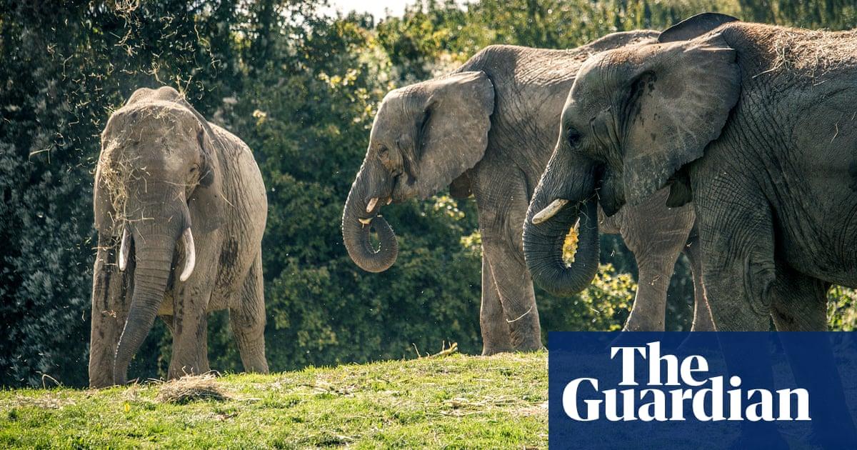 Mammoth journey ahead as elephants leave Kent zoo for the Kenyan savannah