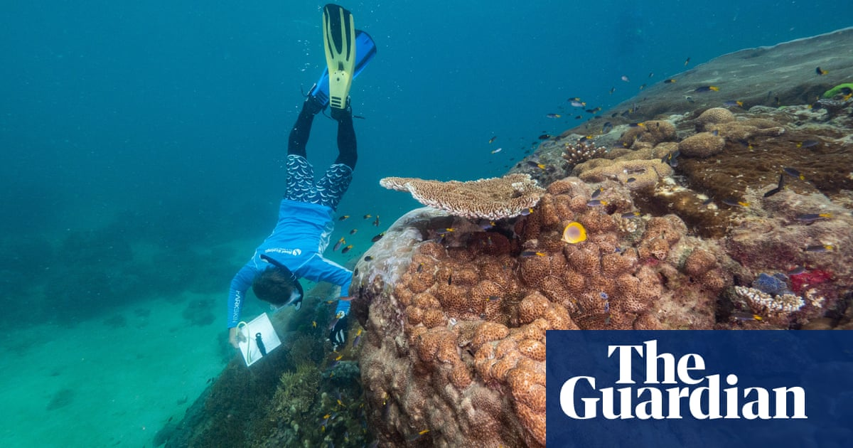 'No one has noticed it': 400-year-old giant coral discovered on Great Barrier Reef