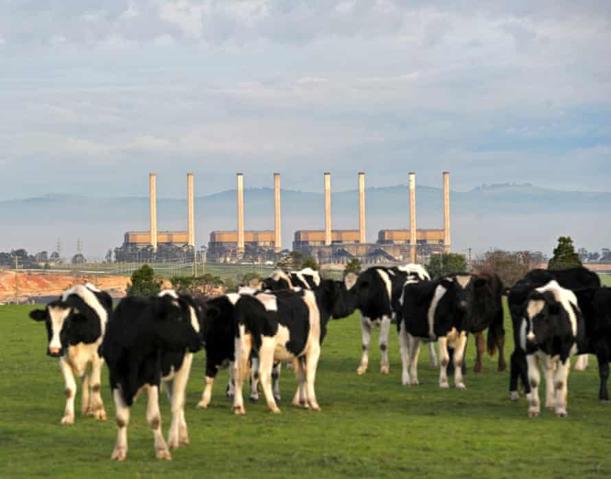 The Hazelwood power station and dairy cattle are seen in the Latrobe valley