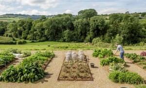 The vegetable garden at Dan's farm in Somerset.