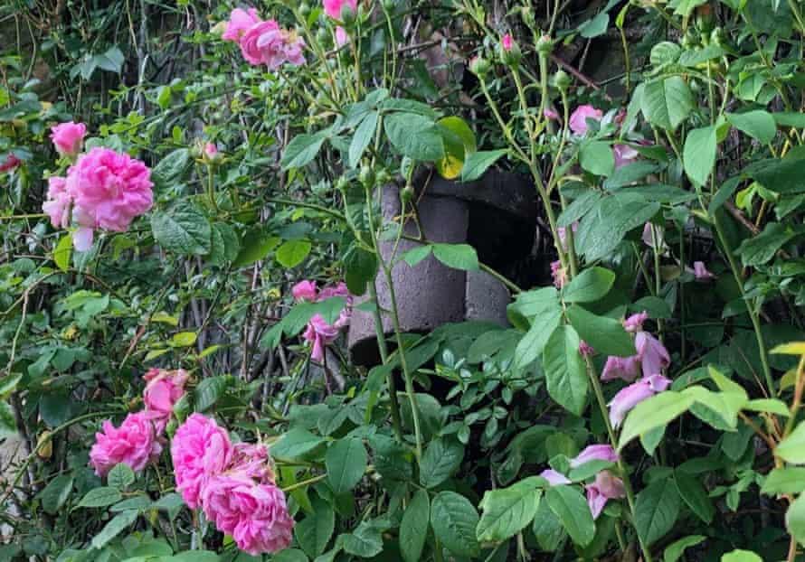 The nest box, partially hidden by climbing roses.