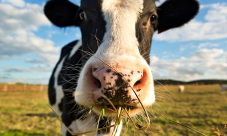 The Department for Environment, Food and Rural Affairs does not gather statistics on antibiotics used on farms.