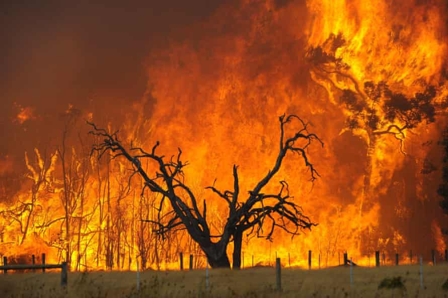 A bushfire in the Bunyip state forest.
