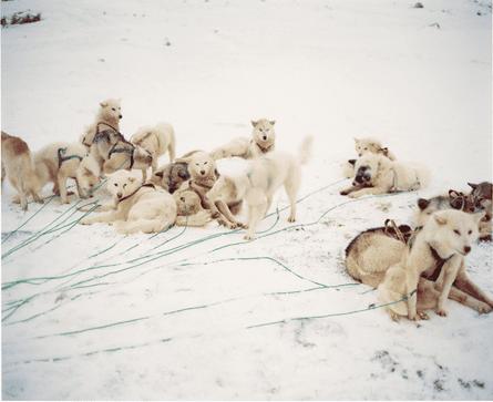 Naoki Ishikawa huskies ilulissat greenland
