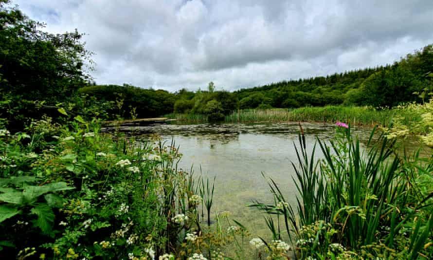 Pond at Parc Slip.