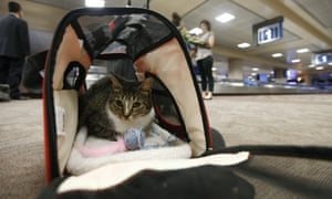 Oscar the cat, who is not a service animal, would incur a fee if his owner claimed he was an emotional support pet.