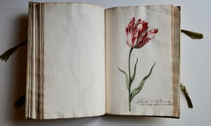 A page from the book of tulips, with watercolour illustration by Jacob Marrel.