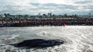 People watch a stranded whale in Mar del Plata, Argentina.