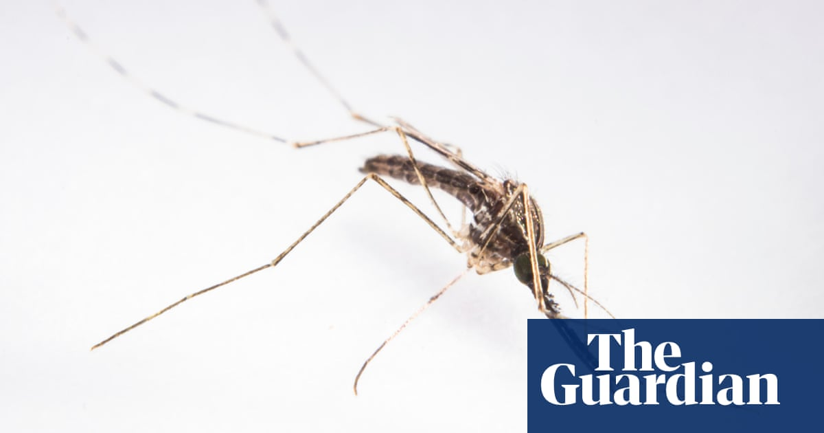 Genetic engineering test with mosquitoes �may be game changer� in eliminating malaria