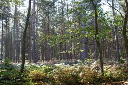Blean woods, near Canterbury