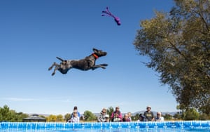 Gardnerville, US. Phoenix competes in the Super Air semi-final at the Splash Dog national championships