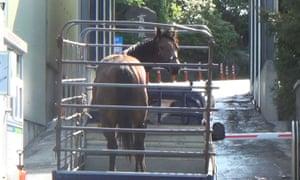 The Australian horse Road to Warrior