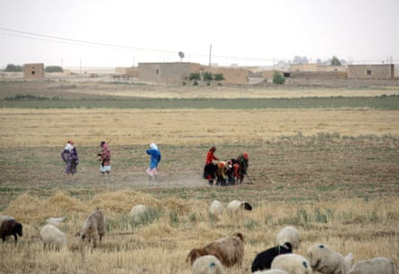 Syrian women till the fields in the drought-hit region of Hasaka in northeastern Syria