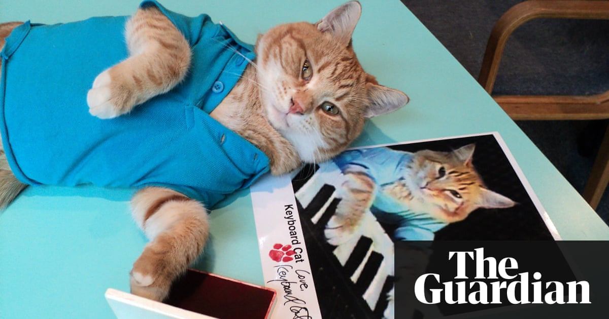 Bento the Keyboard Cat, internet sensation and YouTube star, dies