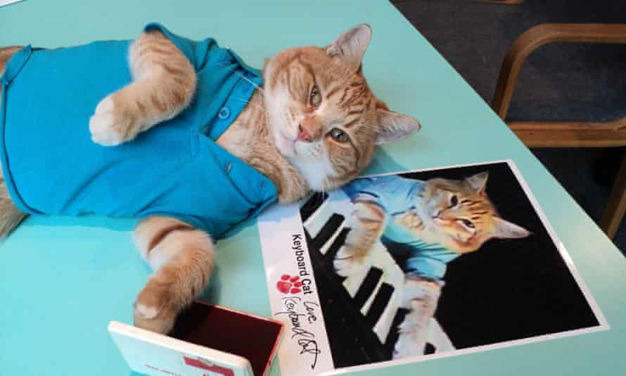 Bento the cat aka Keyboard Cat Keyboard Cat is one of the internet's first ever viral cat videos.