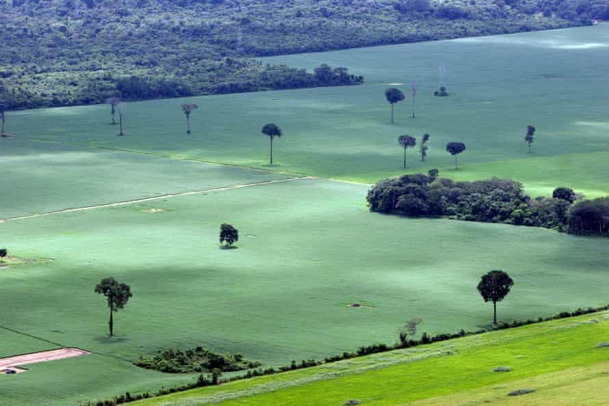 A soy plantation in the Amazon rainforest near Santarém, Pará, north Brazil.