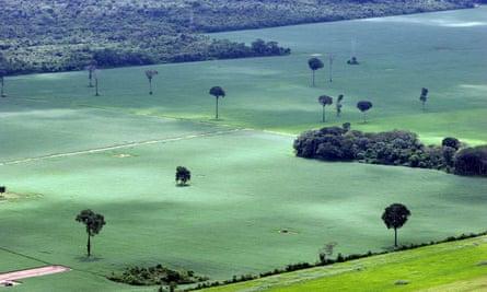 A soy plantation in the Amazon rainforest near Santarem, Brazil.
