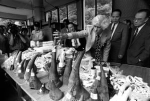 Martin inspects confiscated rhino horns, elephant tusks and ivory objects at the Taipei Zoo, June 1993