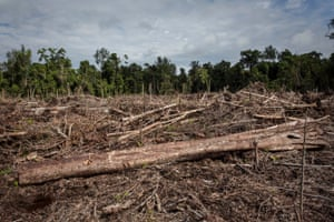 Land clearing for a palm oil plantation in Aceh province, Indonesia