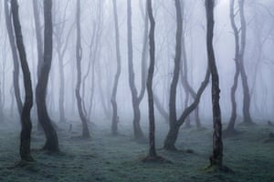 """Francis Joseph Taylor, wild woods category winner: A Magical Morning, Derbyshire""""Thick fog drifted through the eerie silver birches at Bolehill Quarry in the Peak District national park, creating a magical morning of light."""""""