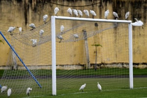 Egrets stand on the goal before a 2017 Africa Cup of Nations football training session in Libreville, Gabon
