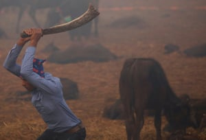 Bariyarpur, Nepal. A butcher swings his blade to sacrifice a buffalo inside an enclosed compound during the sacrificial ceremony of the Gadhimai festival