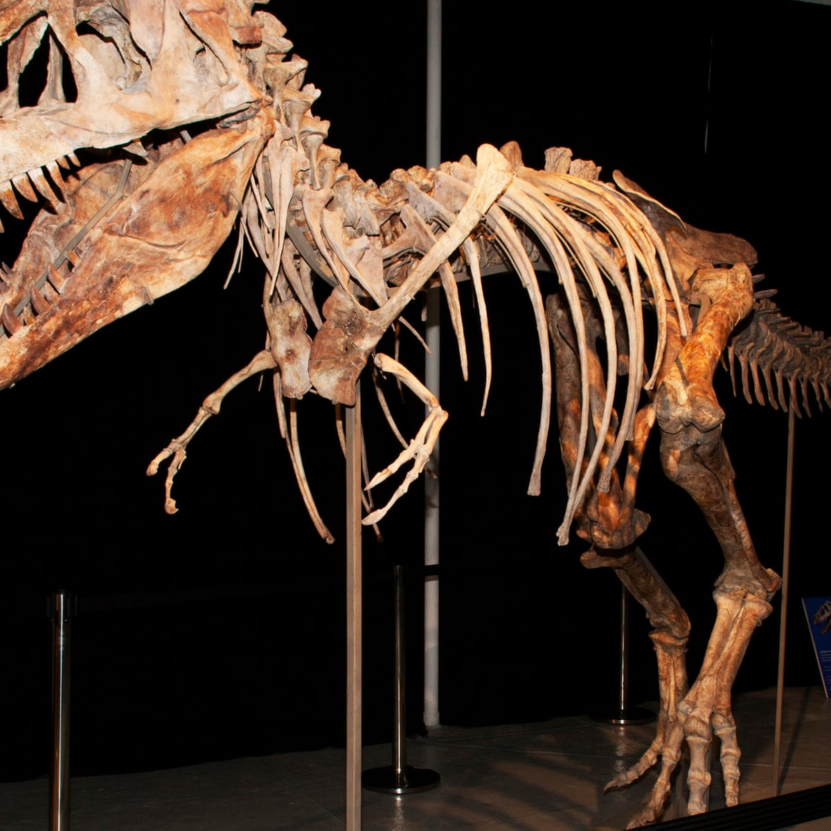 Dinosaur Fossil Collectors Price Museums Out Of The Market
